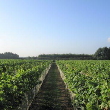 Wijngaard brabant bezoeken