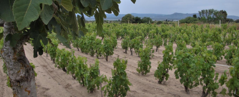 wijngaard-sardinie-bezoeken