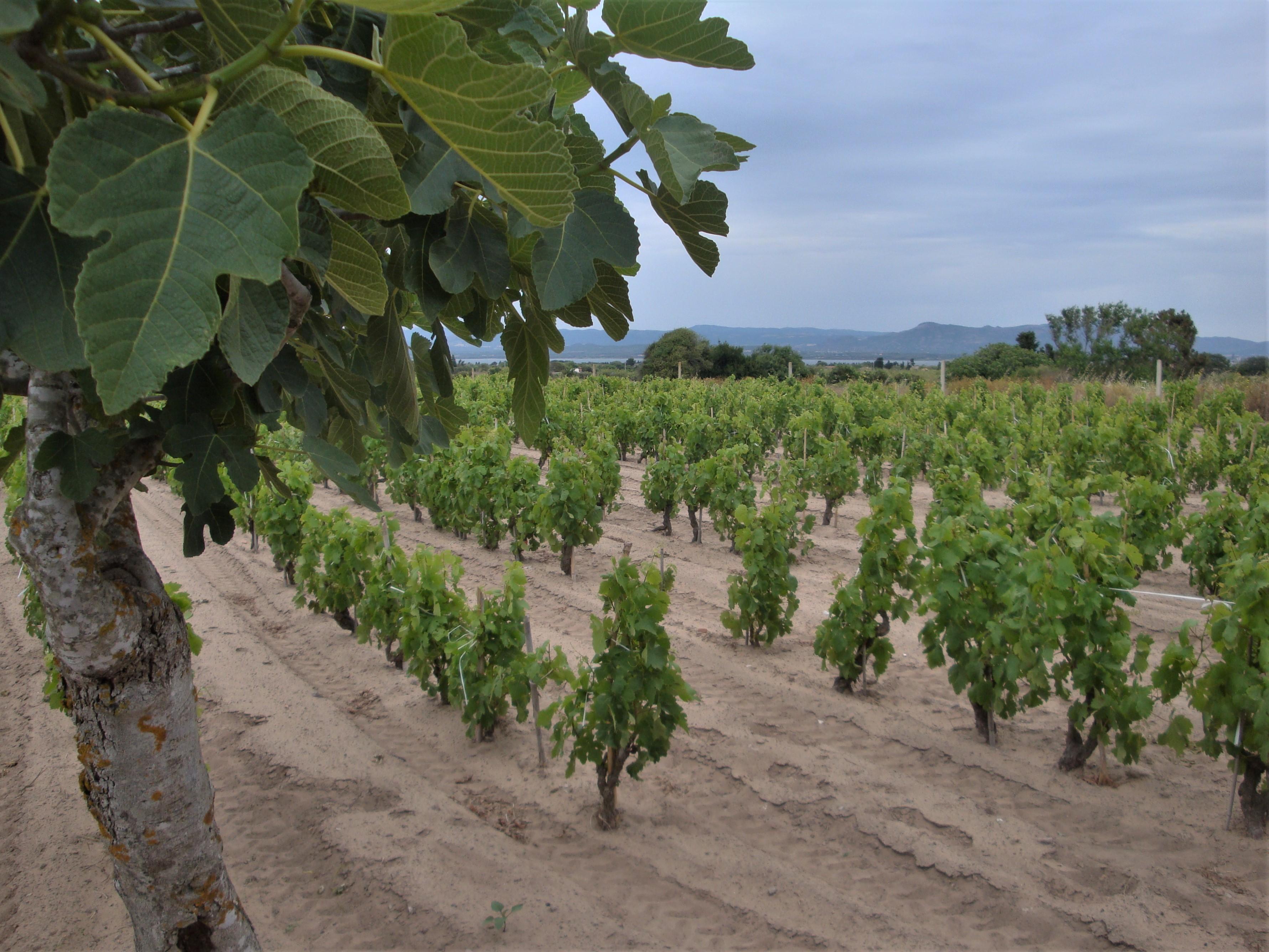 wijnreis sardinie italie