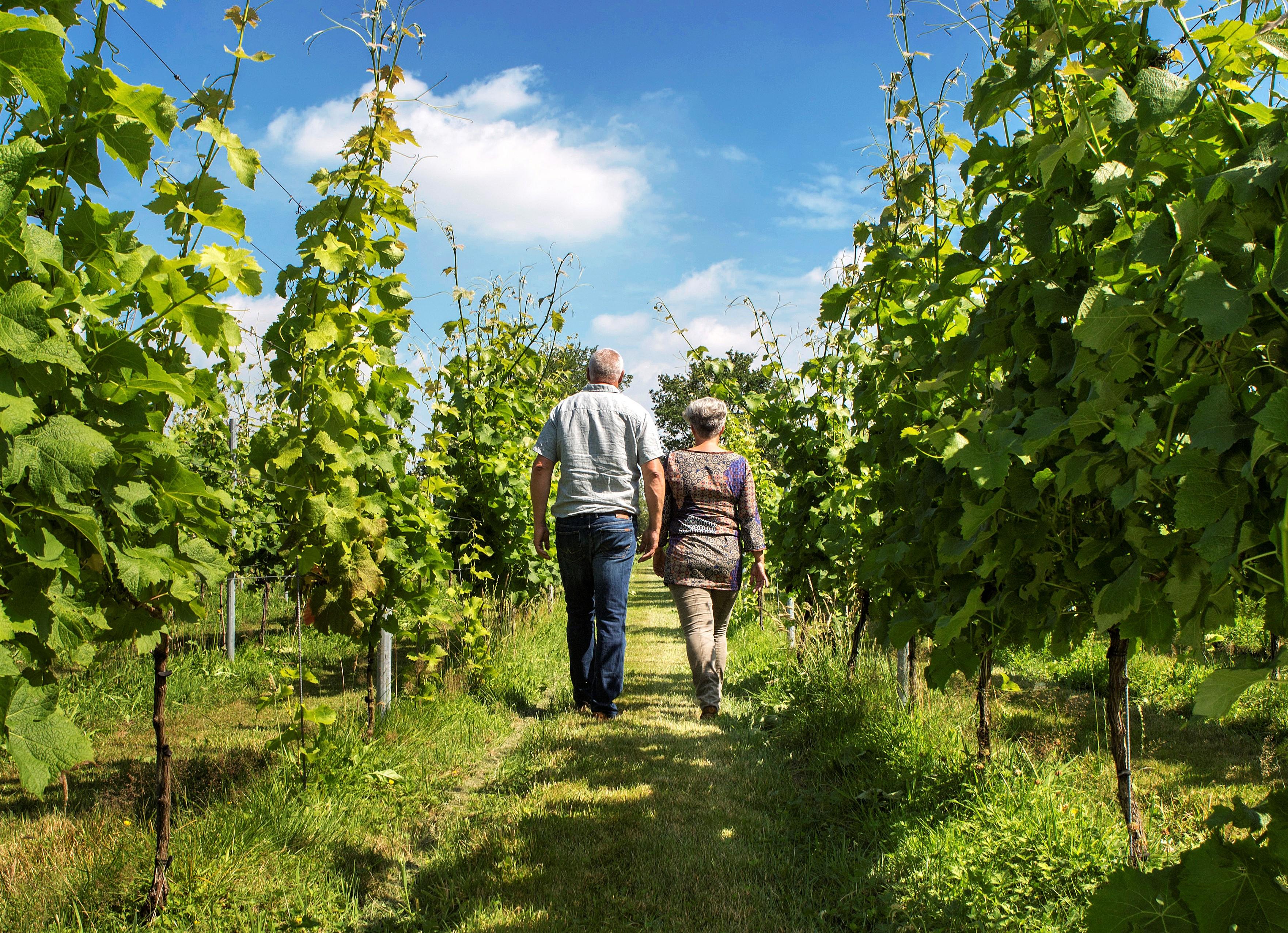 Wijngaard bezoeken Friesland