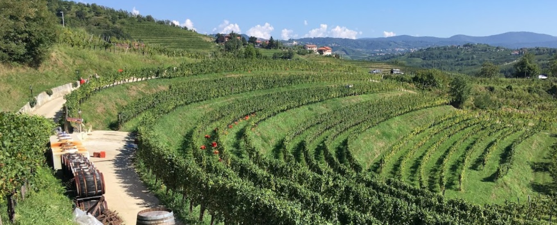 slovenie wijnreis wijnwandelen